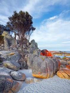 Bay of Fires Tasmania T131Ph • Other Format • Galleries • Photographs • Christian Fletcher Photo Images
