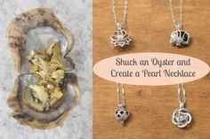 Have you ever wanted to shuck your own oyster and find a beautiful pearl? Well now is your chance. Our oysters offer a beautiful variety of colorful pearls.