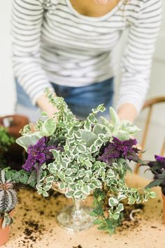 Keeping It Green with a dash of purple: A spring container garden with Purple Passion, Irish Moss, Creeping Fig or Ficus, Moon Valley and Peperomia  Carmen Johnston Gardens