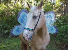Faerie Wings for Horses  Dragonfly Wings for Horse by MyBuddyBling