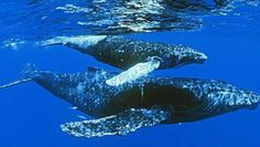 Big beautiful whales have found their way to the coast of Baja California, Mexico.