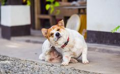 Does Your Itchy Pet Have Scabies?