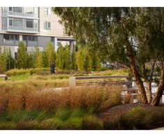 Smith Cardiovascular Research Building — Andrea Cochran Landscape Architecture Architecture Details, Landscape Architecture, Landscape Design, Garden Design, Bamboo Hedge, Landscaping Plants, Green Building, Native Plants, Design Awards