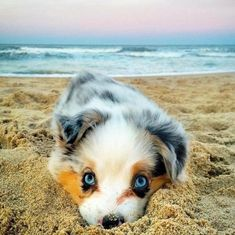 Sweetest Strandgammler - I Love The Animals - . - Cutest Beach Bum – I Love The Animals – # Beach bum # Cutest - The Animals, Anime Animals, Cute Funny Animals, Cute Baby Animals, Top 10 Cutest Animals, Dog Photos, Dog Pictures, Funny Pictures, Cute Puppies