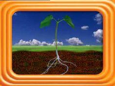 Unidad Didáctica  Las plantas son seres vivos by Ana Gómez on Prezi