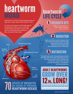 For dog and cat owners! Learn more about Heartworm disease!