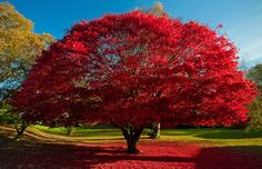 Red by Brian Kerr. The colour of Red, autumnal colours in Ambleside in the Lake District. источник: http://goo.gl/3Mmiw