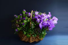basket : seasonal【L】 - THE LITTLE SHOP OF FLOWERS Basket, Seasons, Flowers, Plants, Shopping, Seasons Of The Year, Plant, Royal Icing Flowers, Flower
