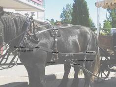 Amerikkalainen työvaljastus; video, valjaiden osat | mw hevospalvelut