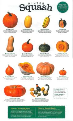 Winter Squash guide Fruit Recipes, Vegetable Recipes, Vegetarian Recipes, Cooking Recipes, Healthy Recipes, Cooking Tips, Food Charts, Fresh Fruits And Vegetables, Vegan