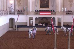 Spanish Riding School <3 Spanish Riding School Vienna