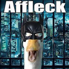 AFFLECK. Ha! But damn it, him as Batman??... ugh...