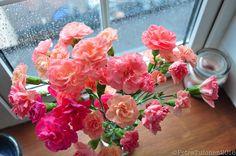 Flowers on a rainy day, aheartyvibe.tumblr.com