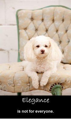#dogs My best buddy!