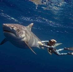 Freediving with the Locals 😁 - 📸 by with Shark Pictures, Shark Photos, Shark Pics, Shark Images, Shark Art, Surf, Great White Shark, Shark Week, Sea Monsters