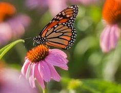Wings in the Park - Bees, Butterflies and Blossoms  - July 23 - 10 AM - 2 PM Tudek Park