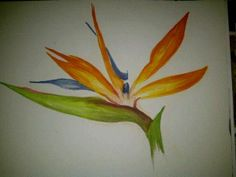 bird of paradise flower painted by me
