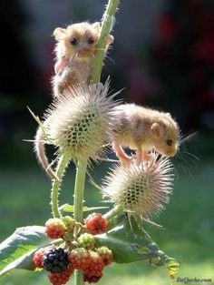 Baby Dormouse | Amazing Pictures - Amazing Pictures, Images, Photography from Travels All Aronud the World.