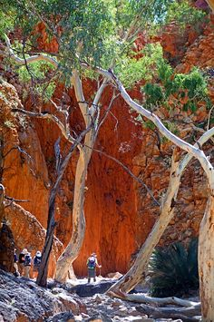 Soak up the ethereal scenery of vast flood plains, razorback rocky outcrops and . Western Australia, Australia Travel, Outback Australia, Australia Landscape, Great Walks, Australian Bush, Camping, Landscape Photos, Landscape Paintings