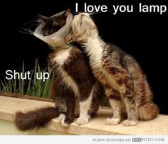 I love you, lamp - Funny cat cuddling with another cat wearing cone.