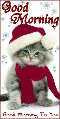 A wide range of adorable kitten themed Christmas cards for cat lovers can be found displayed on this page below. For cat lovers or Merry Christmas Darling, Christmas Kitten, Christmas Animals, I Love Cats, Crazy Cats, Cute Cats, Funny Cats, Pretty Cats, Beautiful Cats