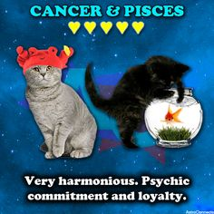 Cancer and Pisces compatibility.