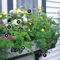 Butterfly Window Box