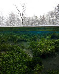 forest underwater