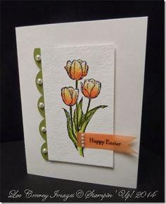 rp_Traditional-Tulips.jpg