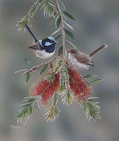 Australian Native Flowers, Australian Animals, Australian Art, Small Birds, Pet Birds, Beautiful Birds, Animals Beautiful, Bird And Flower Tattoo, Bird Artwork