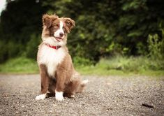 Photos of the most handsome, cute, and pretty dog breeds in the world. Follow these tips and check out our list.
