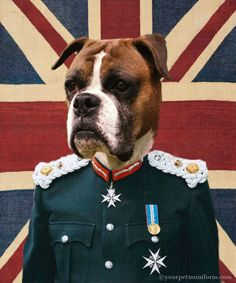 He boxed his way out of trouble in the park wars  #union jack #boxer Gallery | yourpetinuniform.com