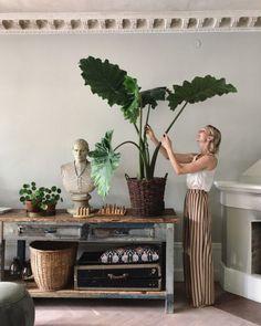 Die 7 besten Bilder von Meine Pflanzen | Nursing care, Apartment ...