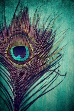 Peacock Feather Art Print by KunstFabrik_StaticMovement Manu Jobst - X-Small Krishna Painting, Krishna Art, Krishna Radha, Krishna Images, Feather Photography, Art Photography, Feather Art, Peacock Feathers, Peacock Colors
