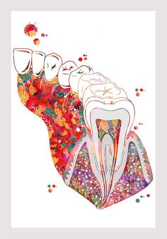 Molar Tooth Section Dental Art Print Anatomy Art Teeth and Gums Molar with Enamel Dentin Pulp Root Medical art Watercolor Dentist Clinic Art - オーラルケアに関するすべて - Everything About Oral Care Dental Office Decor, Dental Office Design, Office Fun, Office Lobby, Office Floor, Dental Wallpaper, Dentist Clinic, Molar Tooth, Emergency Dentist