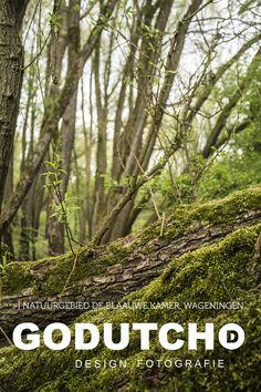 Natuurgebied de Blaauwe Kamer, Wageningen