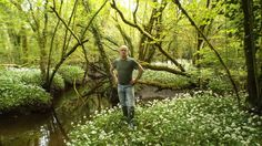 Its fans say that the Gearagh woodland, with its delta-like network of streams and rivulets, could be to Co Cork what the Cliffs of Moher are to Co Clare. Just be careful not to get lost Tree Watch, Irish Times, Cliffs Of Moher, Woodland, Empire, Environment, River, Cork, Fans