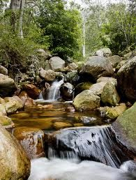 newlands forest cape town - Google Search