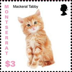 On 7 November 2013 Montserrat issues a set of stamps showing kittens of unspecified breeds. http://www.catstamps.org/