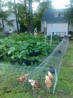 22 Low-Budget DIY Backyard Chicken Coop Plans , DIY Chicken Tunnel-design a specific area for the chickens to walk through the garden. Backyard Garden Design, Vegetable Garden Design, Diy Garden, Garden Projects, Backyard Landscaping, Backyard Ideas, Diy Projects, Garden Planters, Vegetable Gardening