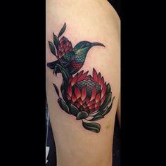 Protea and sunbird.
