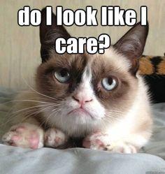 Grumpy cat funny, grumpy cat humor, grumpy cat meme ...
