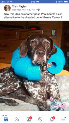 Cut pool noodle and fit around their widened collar. Inexpensive a… DIY Dog Cone. Cut pool noodle and fit around their widened collar. Inexpensive and easier on them. Animals And Pets, Cute Animals, Diy Stuffed Animals, Dog Accessories, Dog Grooming, Grooming Salon, I Love Dogs, Pet Care, Puppy Care