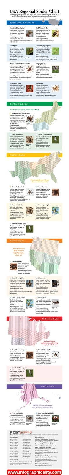 Spider Identification Chart Infographic - http://infographicality.com/spider-identification-chart-infographic/