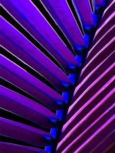 Purples by ringydingydo, via Flickr