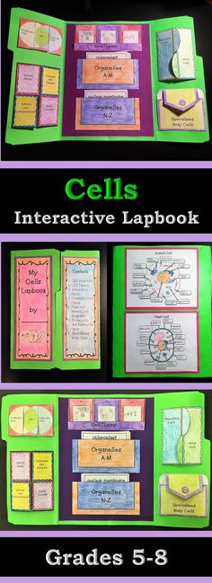 Cells Interactive Lapbook - Cell Diagrams and Theory, Organelles, etc - Ciencias naturales - Biology Art, Science Biology, Science Lessons, Science Activities, Addition Activities, Cell Biology, Science Art, Interactive Learning, Interactive Notebooks