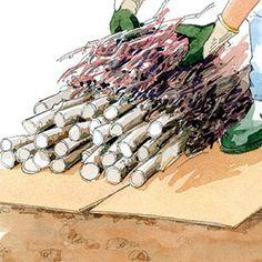 Un pas à pas en image animée pour réussir la culture d'un potager sur butte.