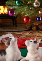 Training Your Cat To Stay Off The Christmas Tree
