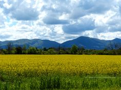 The colours of Maremma Tuscany in spring: yellow and green in April