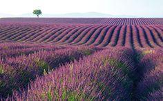 Plantas aromáticas, una alternativa viable y productiva en C-LM - Noticias de Agricultura - La Cerca